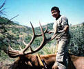 Trophy Elk, treking the world's largest antler bearing trophies, tags go as high as $25,000 USD. Elk horn can be obtained through certified Apache colectors, please contact the Game & Fish department to learn more. Elk horn has been long known as a medicinal health aid.